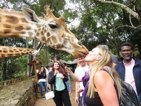 The Giraffe Center in Nairobi Kenya - YouTube