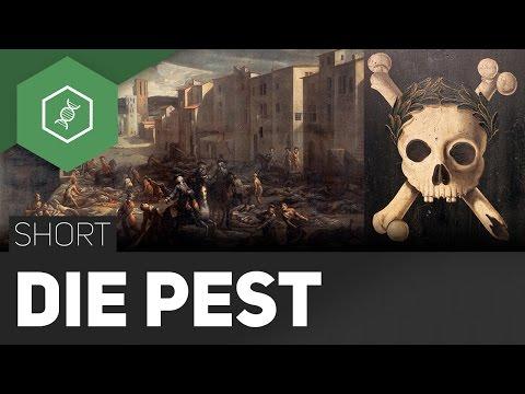 Die Pest – Ausbruch jederzeit möglich?! - #TheSimpleShort