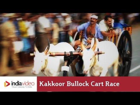Kakkoor Bullock Cart Race, Kochi
