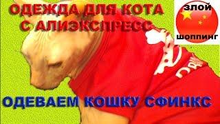 Одеваем Кошку Сфинкс Баст в Маечку с Алиэкспресс - Одежда для Кота из Китая