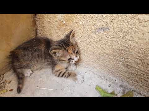 Getting bit by feral kitten (plz read the description and my pinned comment before negative comment)
