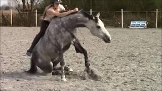 Horses bloopers - Fails