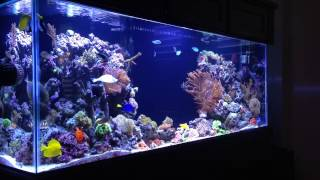 REEF TANK ADDICTION Season 1 Episode 1