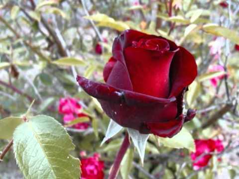Aranjuez - Mon Amour