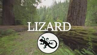 Music Life Track /Lizard
