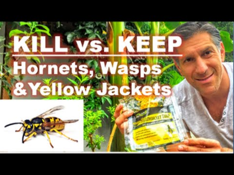 KILL vs. KEEP | Hornets, Wasps & Yellow Jackets | The Food Chain Pyramid Of Life