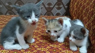 Cute Kittens Crying For Her Mother || Cute Cat baby Missing Her Mother
