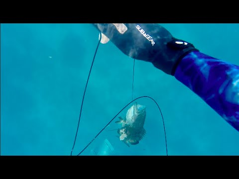 Florida Keys Spearfishing: Islamorada 2016