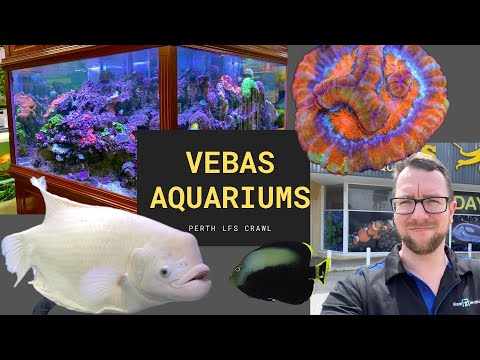 Perth LFS Crawl - Vebas Aquariums