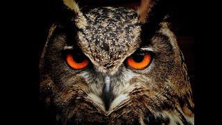 Uccelli rapaci diurni e notturni (versi)