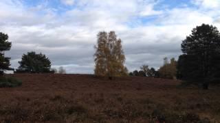 Im Wald und auf der Heide 01