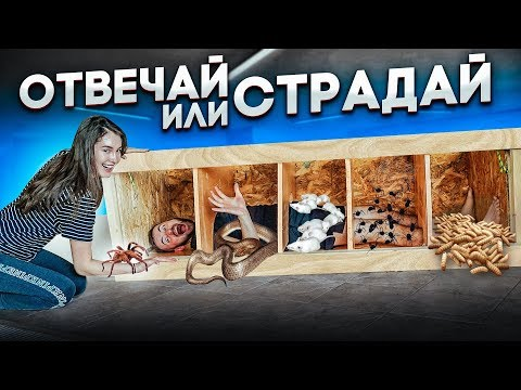 ВАНЯ СТРАДАЕТ НА ОТВЕЧАЙ ИЛИ СТРАДАЙ!!! Ваня VS ядовитый паук, тараканы, мыши...
