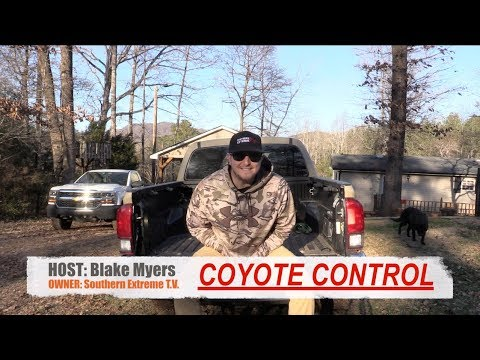 Coyote Hunting Tip #19 – How To Hunt Coyotes In Woods