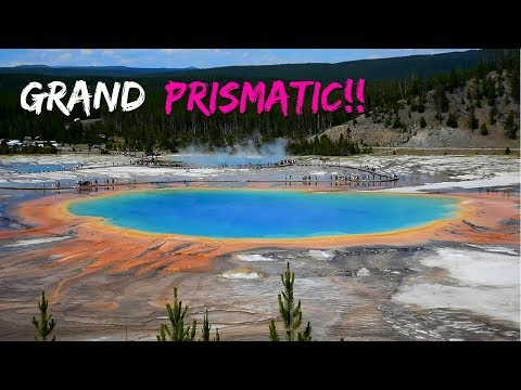 Yellowstone! Grand Prismatic Spring Lower Falls and Bison Rut!
