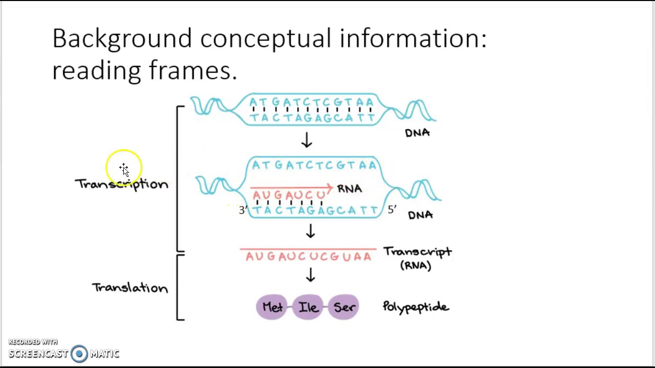 Genome Annotation, Sequence Conventions and Reading Frames - YouTube