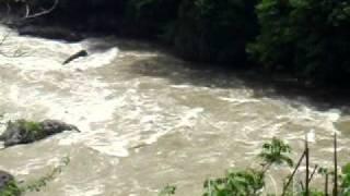京都・保津川「大高瀬」2011年5月13日お昼頃