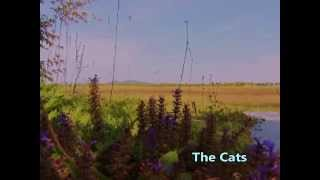 The Cats  /  I Walk Through The Fields   ひとりぼっちの野原 / ザ・キャッツ