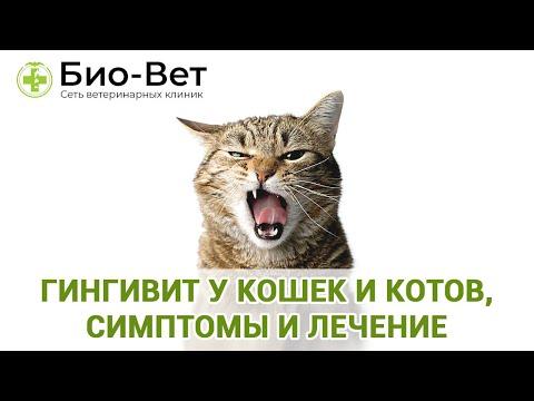 Чем лечить гингивит у кошек в домашних условиях