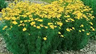 Watch Tom T Hall Little Green Flower With The Yellow On Top video