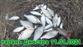 рыбалка на Днестре тарань и карась рыбалка это жизнь 11 января 2021