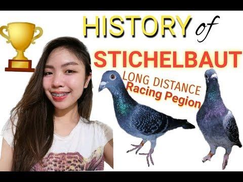 STICHELBAUT Long Distance Racing PIGEON- TAWID DAGAT-HISTORY OF STICHELBAUTS