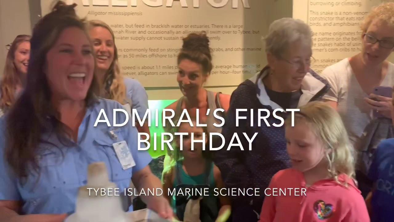 Tybee Island Marine Science Center celebrates turtle Admiral's birthday