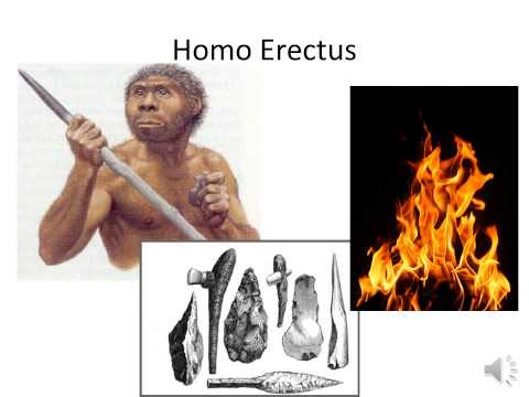 The Five Types of Hominids SOL review
