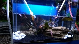 How to make planted aquarium   - try it yourself