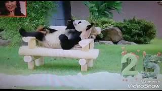 25歳の親パンダの永明の可愛い姿は絶品です.
