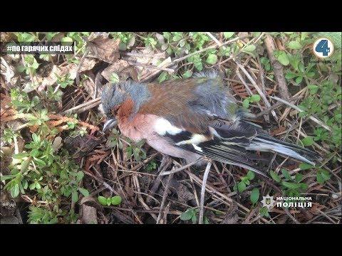 На Тернопільщині гинуть тварини і птахи