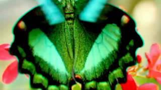 ТОП 10 самых редких бабочек 🌸🌹🌷