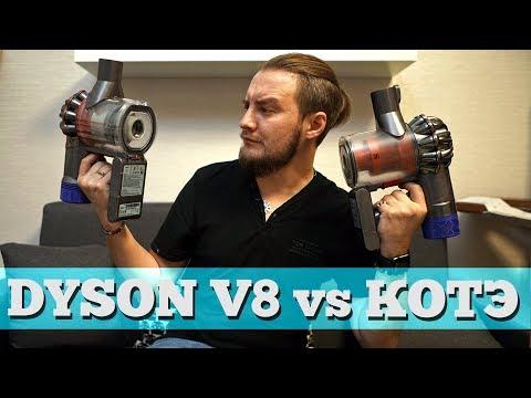 Dyson V8 против двух Мейн-кунов!