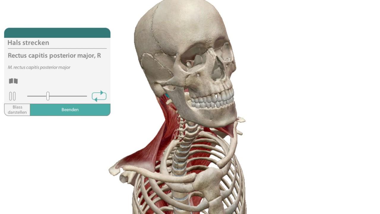 4 m rectus capitis posterior major Hals strecken - YouTube