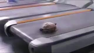 Kaplumbağa Hızlı Koşmayı Öğreniyor !  |  Viral Ordusu