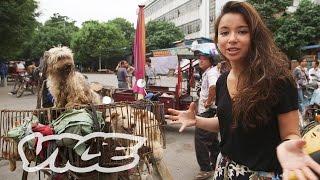 Download Video Bersantap Anjing di Yulin MP3 3GP MP4