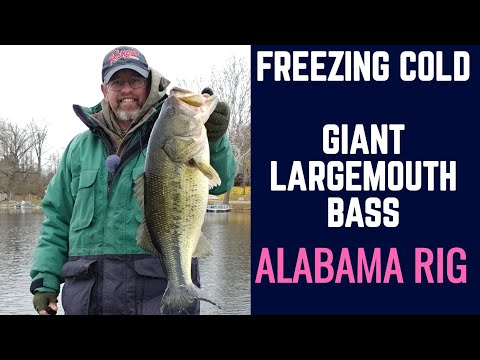 Giant Largemouth Bass in Cold Water   Late Fall