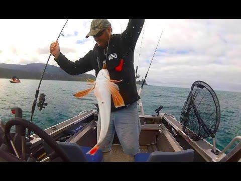 Wellington Boat Fishing -