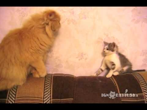 Kitten Tests the Boundaries of Older Cat, Finds them Strict