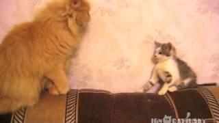 この想い伝わるのか?大きい猫と遊んでほしい子猫があの手この手で遊んでアピール。