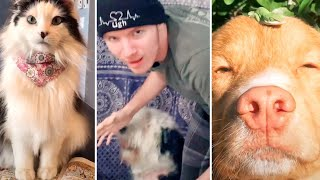 TOP VIRAL TIKTOK ANIMAL VIDEOS (Compilation)