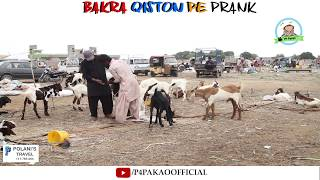 | Bakra Qiston Pe Prank | By Nadir Ali And Rizwan In | P4 Pakao | 2018