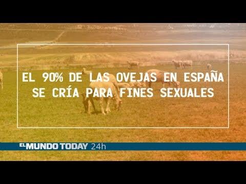 El 90% de las ovejas en España se cría para fines sexuales | El Mundo Today 24H