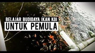 Budidaya Ikan Koi Dapat Anda Pelajari Di Sini Bareng Pakar Untuk Pemula | Pasar