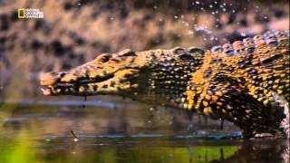 National Geographic HD: Природная инженерия. Выживание в джунглях