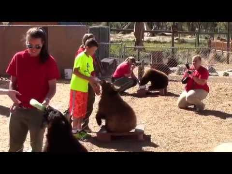 Bottle Feeding Bear Cubs - Yellowstone Bear World