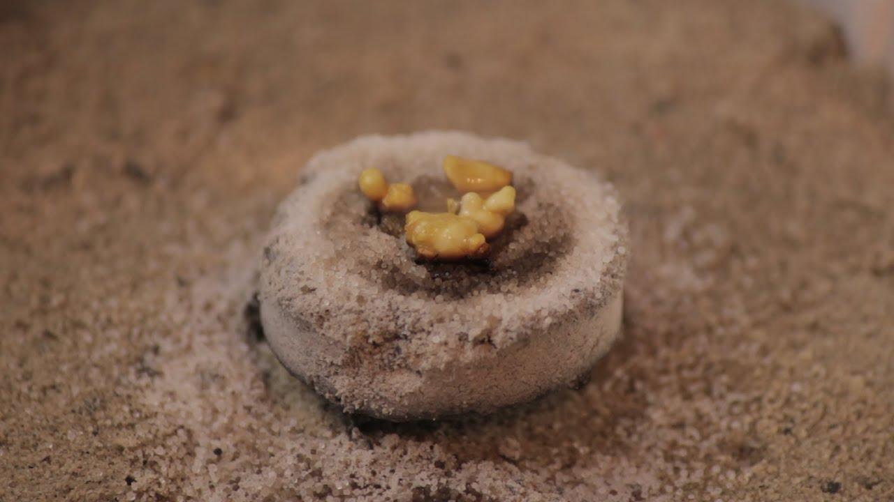 How to burn frankincense and myrrh