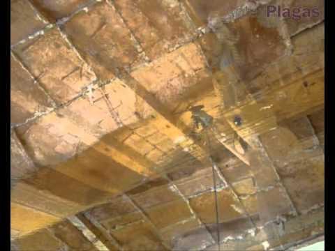 Tratamiento de madera y vigas atacadas por carcoma o - Restaurar vigas de madera ...