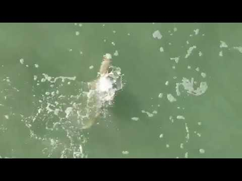 Thumbnail: Shark Attack In Cocoa Beach Florida