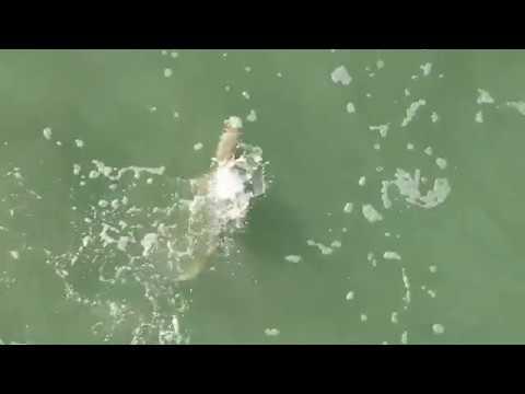 Shark Attack In Cocoa Beach Florida