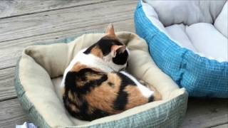 Stray Cat and Two kittens. Watch what Happens!